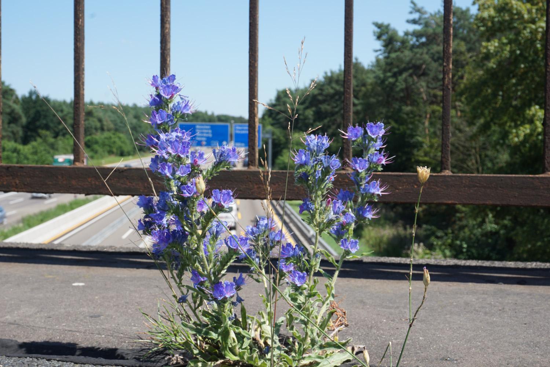 Naturbelassene Autobahnbrücke