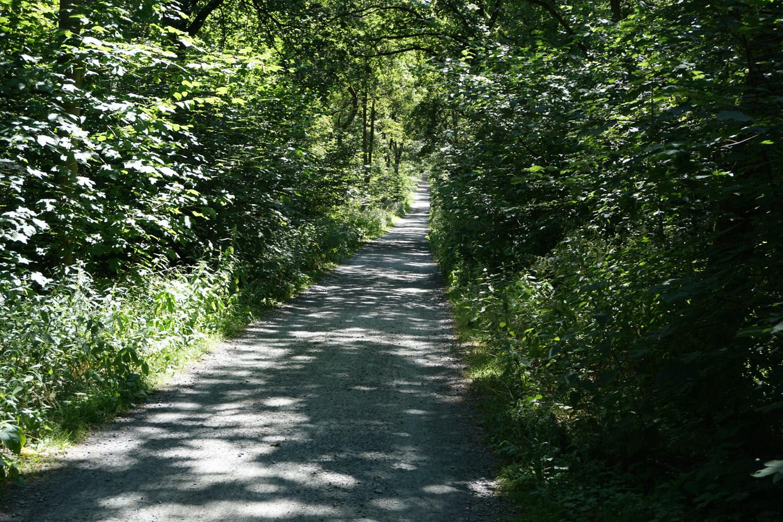 schöner, schattiger Waldweg