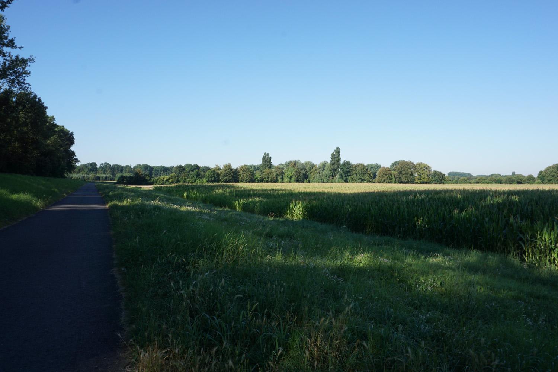 Schöne Rheinauen