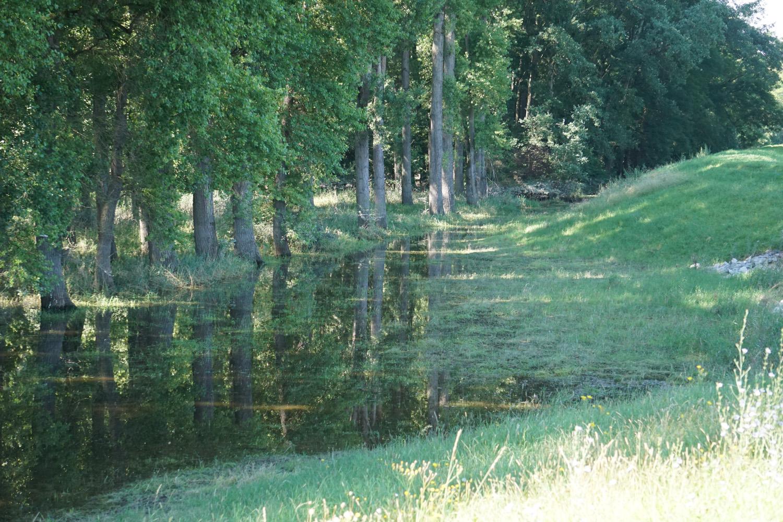 Sumpfgebiet mit vielen Mücken.