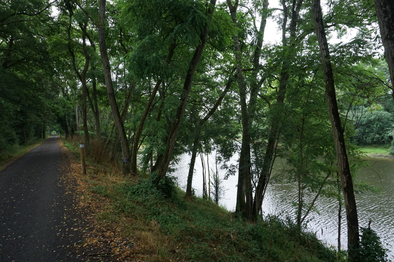 Schöner Waldweg direkt an der Loire