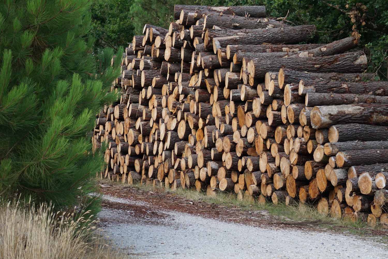 Holznutzung