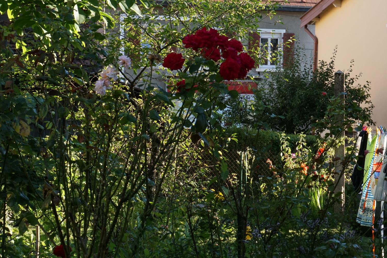 Garten meiner Gastgeber