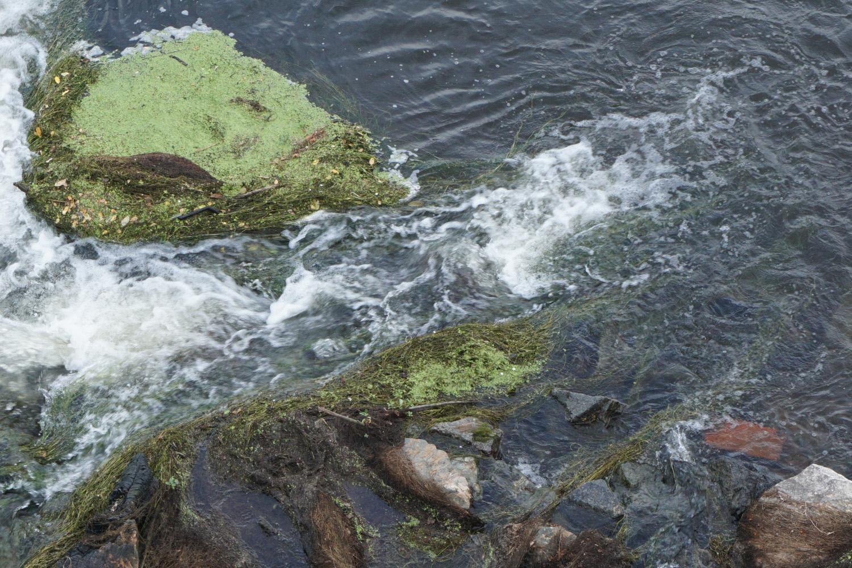 Steine in der Loire