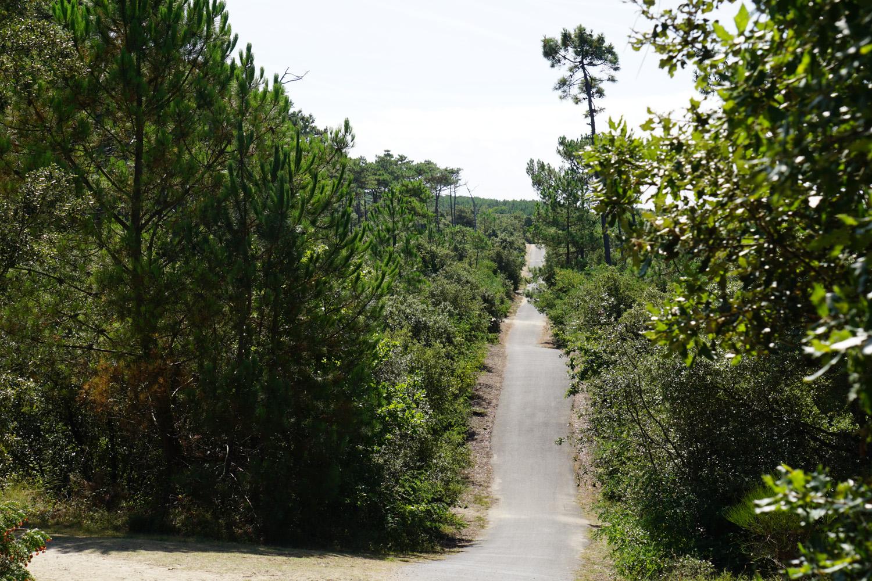 Radweg mit Steigungen durch den Wald