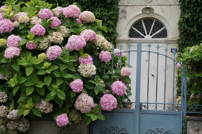 Alte Häuser und Hortensien, immer wieder schön
