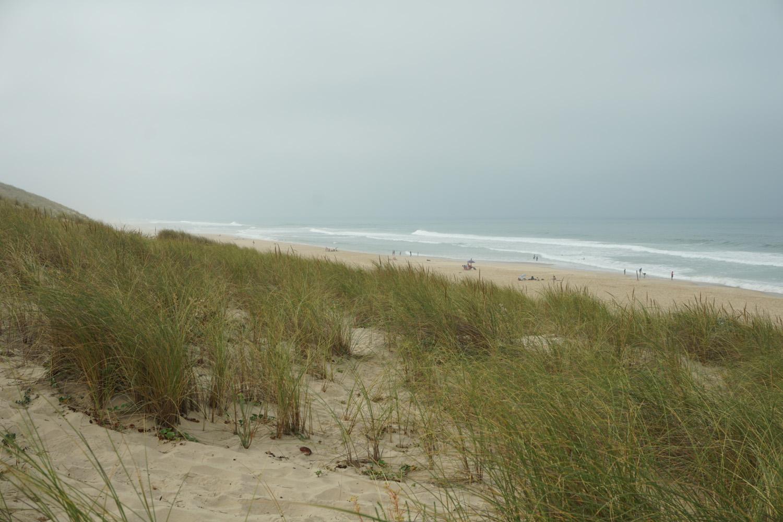 hohe Dünen zwischen Pinienwald und Strand