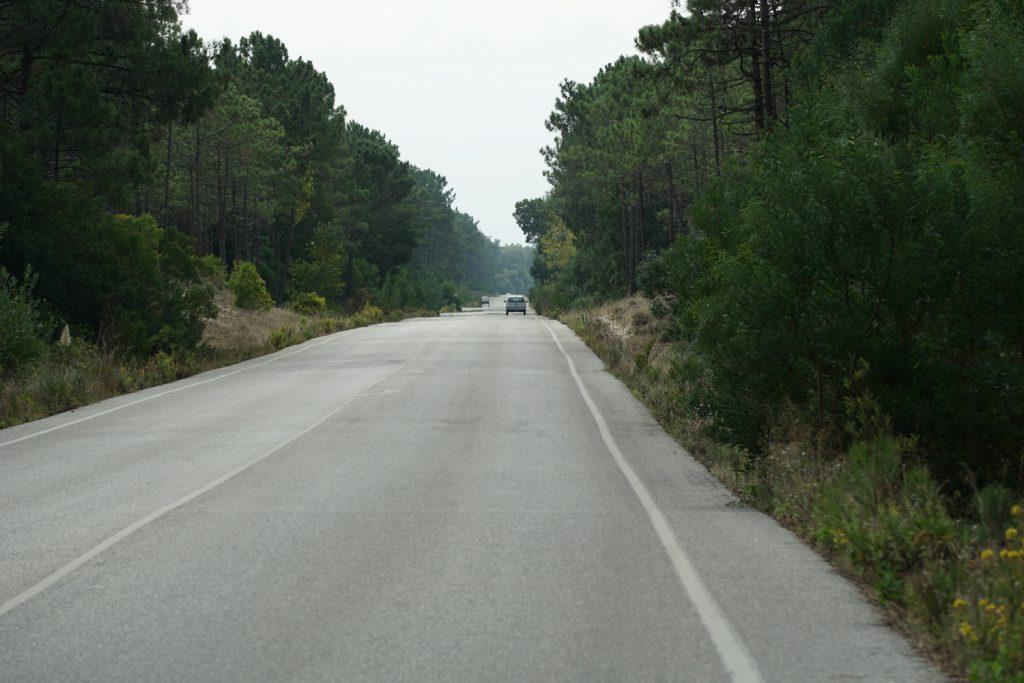 Immer durch den Wald auf ruhiger Straße