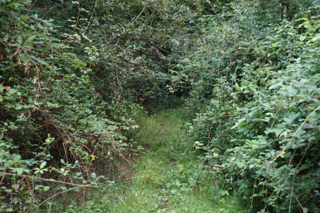 Diesem Weg sollte ich folgen, rechts und links Brombeerhecken
