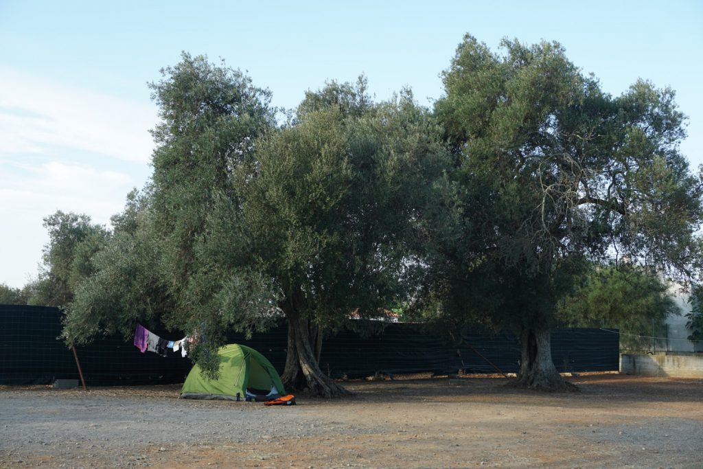 Nice tent - no, nice trees (old olivetrees)