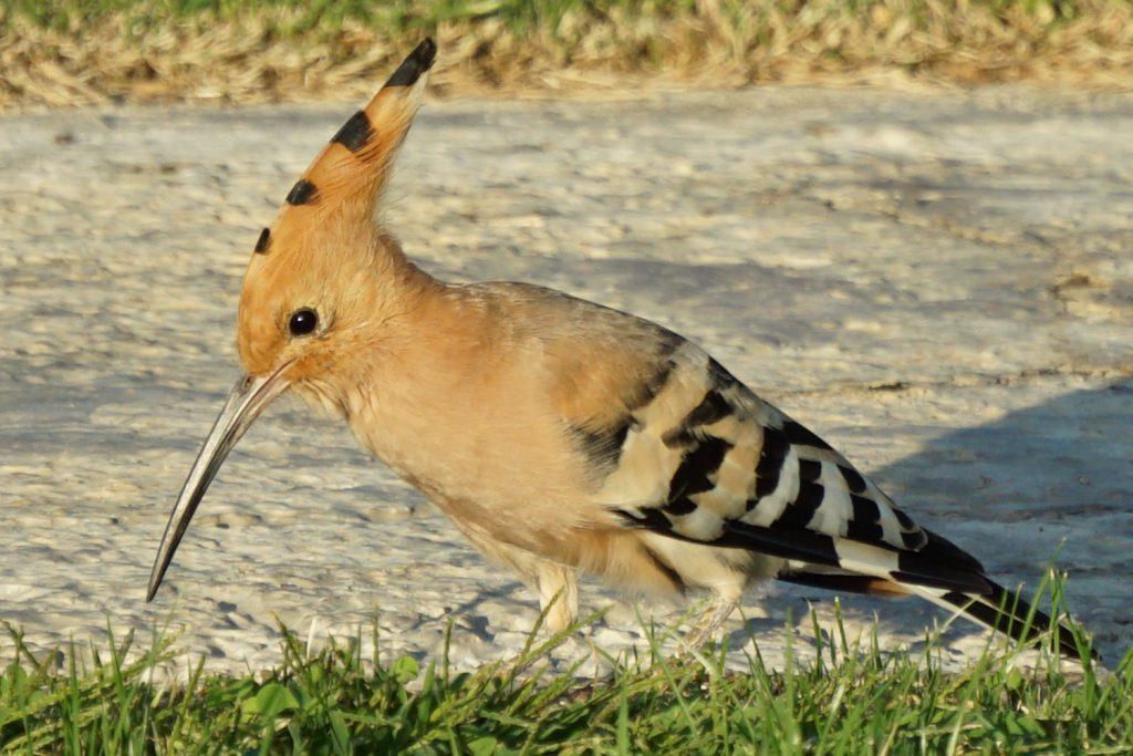 Weiß jemand, wie dieser Vogel heißt?
