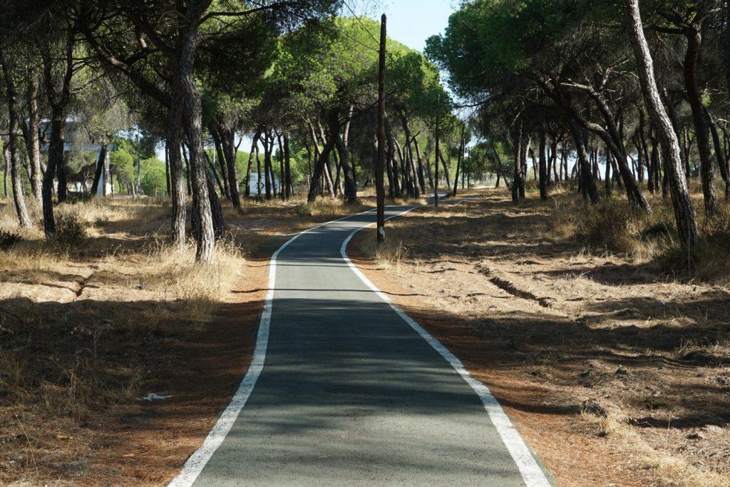 Radweg durch Pinienwald