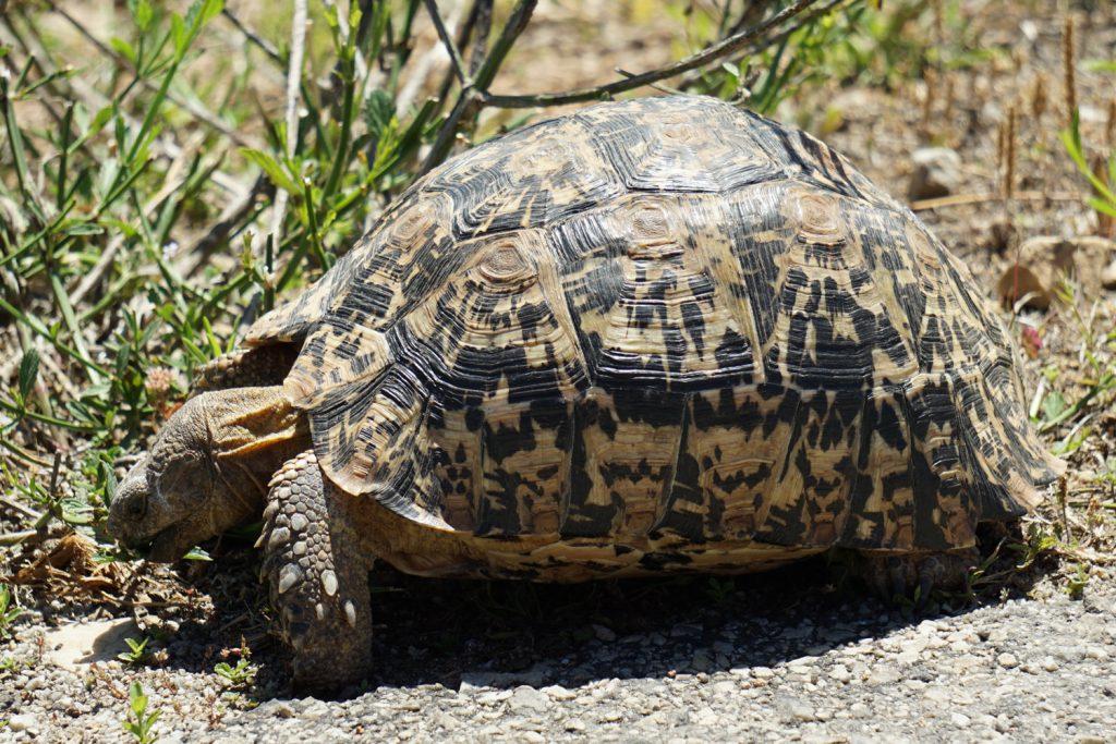 Schildkröte am Straßenrand