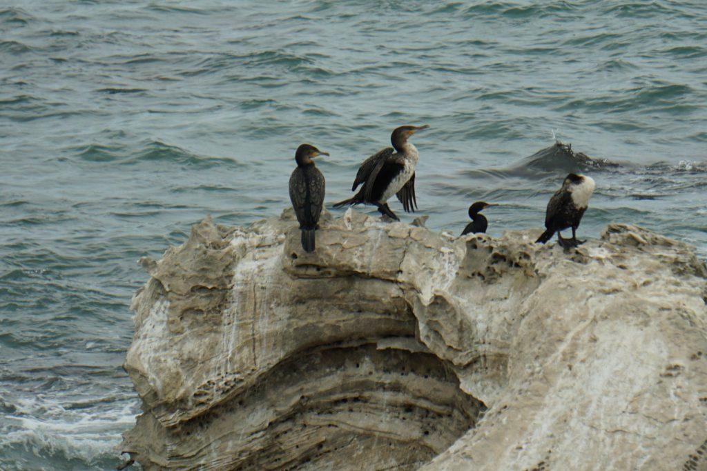 Vögel auf dem Felsen