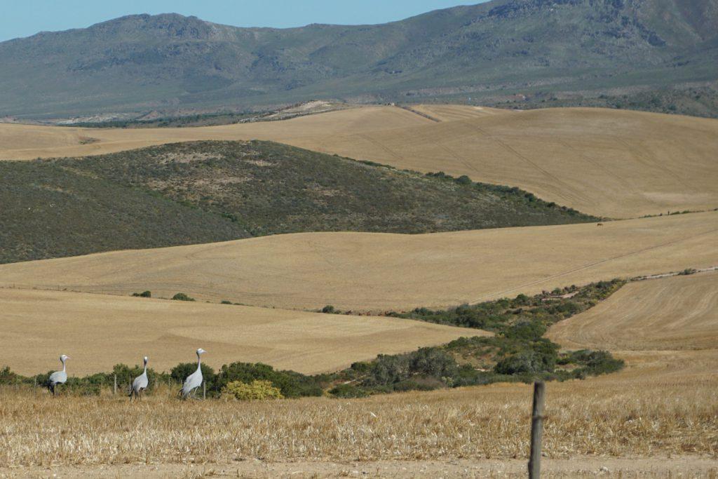 Weite landwirtschaftliche Flächen