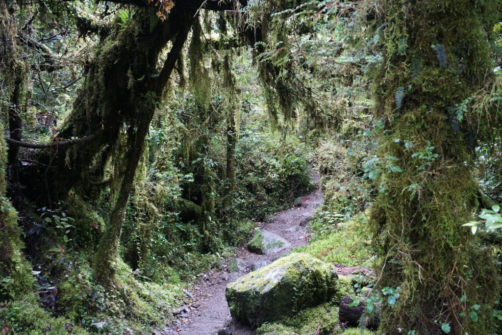 immer durch den Regenwald und immer bergauf